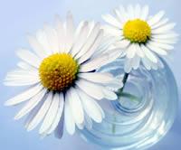 Frühlingszeit  = Wellnesszeit  - 3 + 1 Gratis
