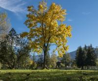 Herbst-Angebot