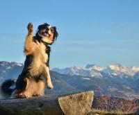 Wellnessurlaub mit Hund & Katz